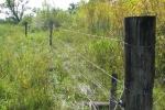 riparian_fencing_2