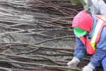willow_planting