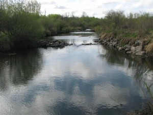 Beaver Dam on the Creek