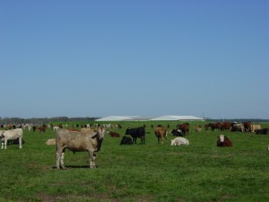 Evergreen Land and Cattle