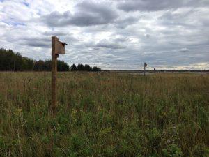 Upland grasstand